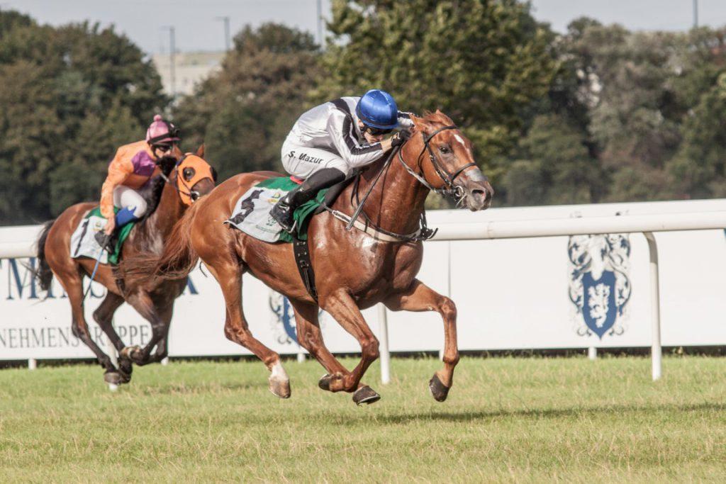 Poland's Sluzewiec Horse Race Track to host Sheikh Zayed Bin Sultan Al Nahyan Cup tomorrow