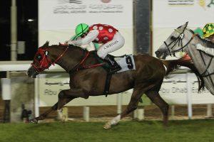 Abu Dhabi all set for biggest meeting of Purebred Arabian horses on Nov. 9