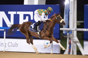 Another success for Wathba Stallions Mahabb-sired Shateh breaks Meydan track record in Group 2 Bani Yas