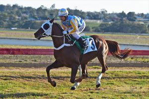 Djehlbi wins Wathba Stallions Cup in Warwick, Australia