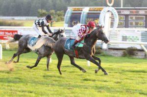 Gulf News: Swedish delight in Wathba Stud Farm Cup