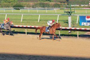 Gulf News: Wathba race day