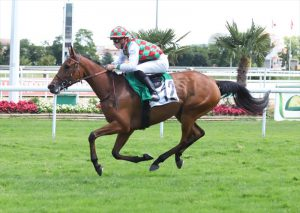 Read more about the article HH Sheikh Mansoor horses score double in Toulouse races