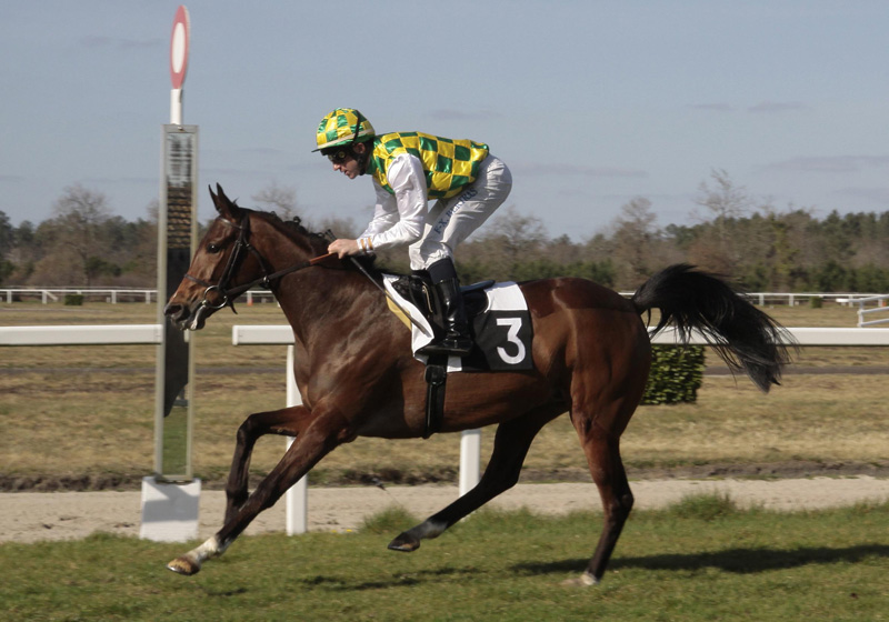 You are currently viewing Salaamah, Jean-Baptiste up, will be difficult to beat as the well-bred Arabian colt lines up