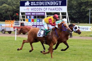 Read more about the article Strong fields for HH Sheikh Mansoor Festival races in The Netherlands