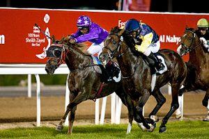 The National : Arabian horses buck the sporting trend