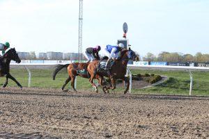 Top class field for Wathba Stud Farm Cup in Belgium