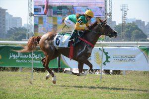 Wathba Stallions Cup events in Sao Paulo