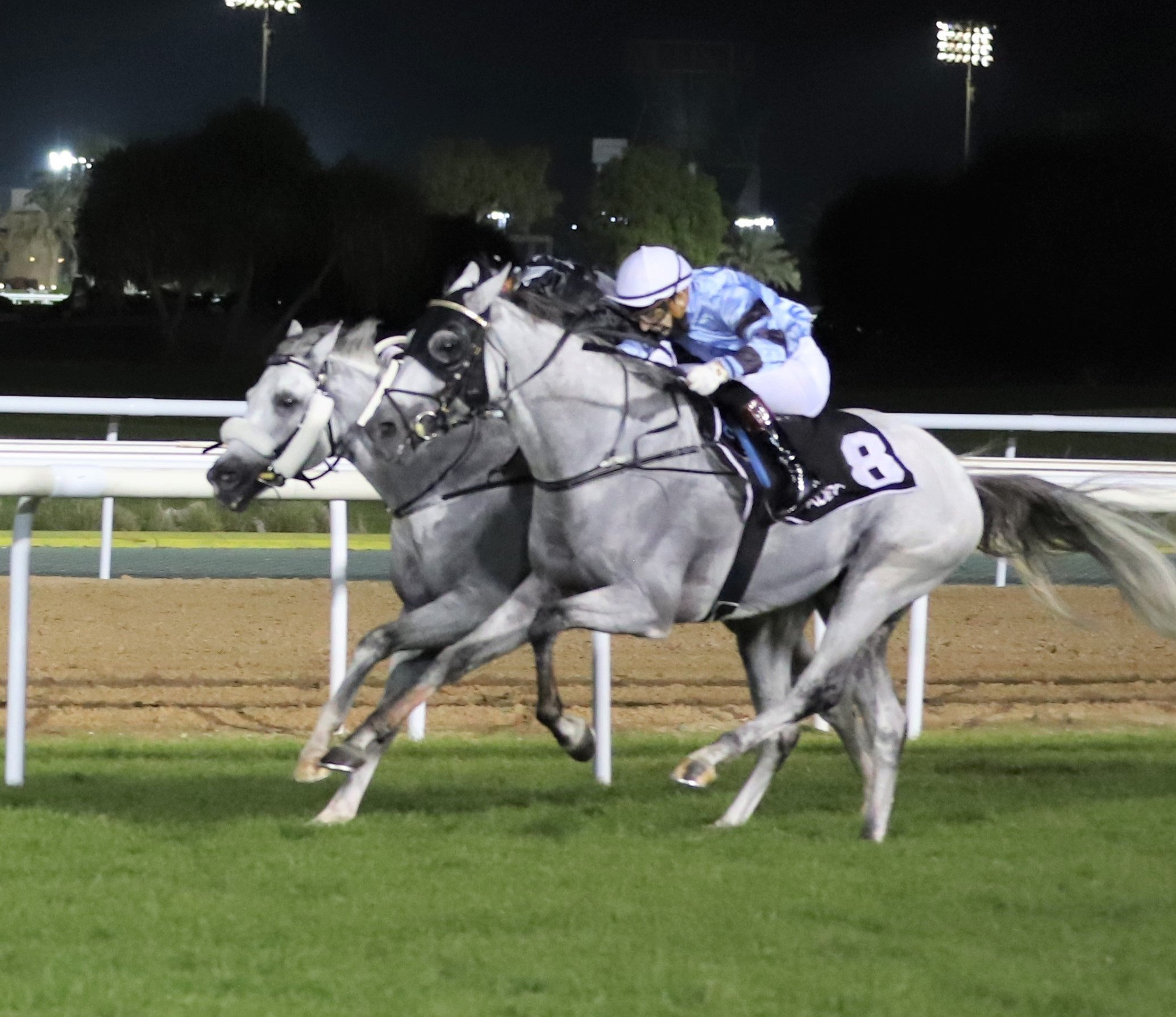 16 horses in round (8) of the Al Wathba Stallions Cup in Abu Dhabi