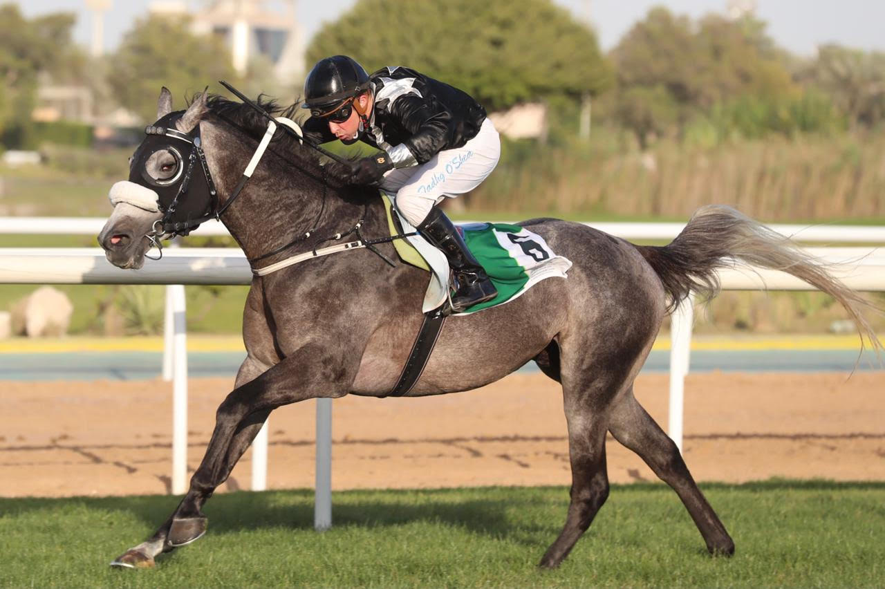 """You are currently viewing O'Shea enters the """"Mile Stone"""" club with the Al Wathba Stallions Cup"""